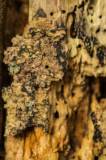 Textured  Trunk Tree Trunk Tree Close-up Rough Pattern Plant Focus On Foreground Weathered Wood - Material Lichen Bark Plant Bark No People