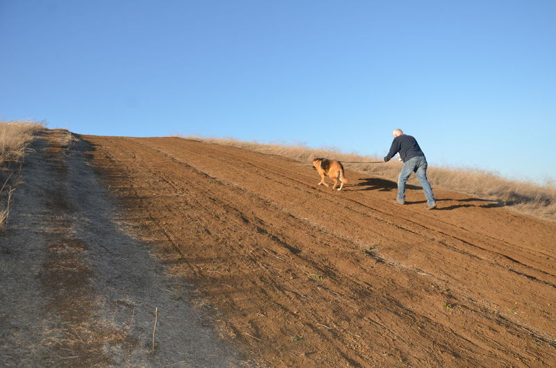 Rear view full length of man walking with dog on dirt road against clear sky