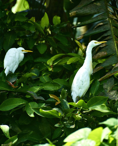 Animal Themes Animals In The Wild Beauty In Nature Bird Close-up Day Flower Freshness Great Egret Green Color Growth Leaf Nature No People One Animal Outdoors Plant Vietnam Trip White Color