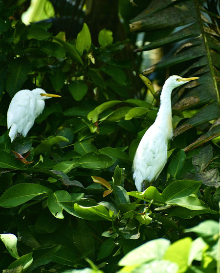 Close-up of white bird on plant