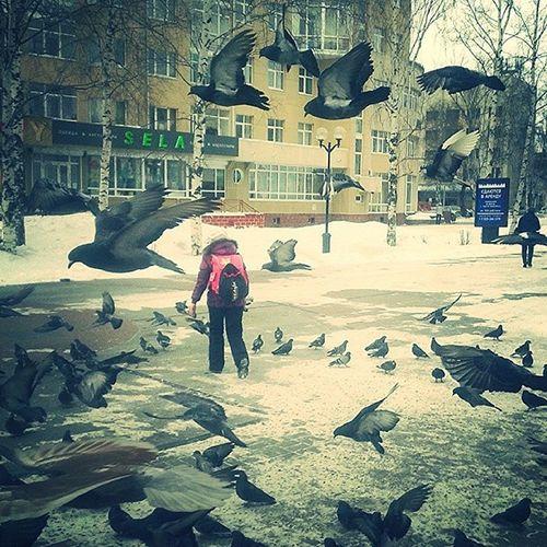 Pegions KhantyMansiysk Khanty Pegions Birds westsiberia north Siberia russia instarussia instacity city yugra хмао югра ханты птицы голуби Сибирь