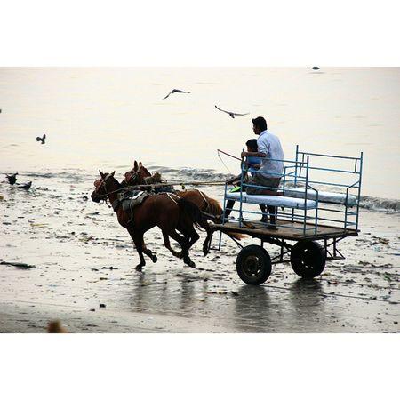 Ghoda gadi..// . . Canon T3i . . Horseride Sunset Sealink Mymumbai Pw_mumbai India_pictures Mumigerspicks India VSCO
