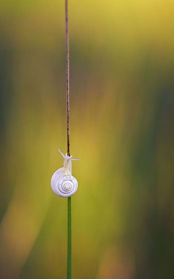 Close-up of snail on twig