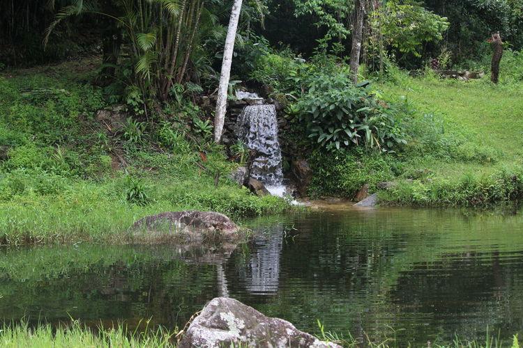 Lake and nature
