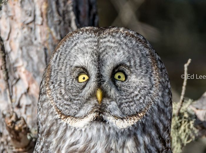 Sun worshiper Bird Owls Owl Malephotographerofthemonth Bird Of Prey Animal Wildlife One Animal Animals In The Wild Animal Themes Close-up Portrait No People Nature Perching Beauty In Nature Outdoors