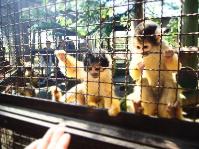 Monkeys Africansafari Oita,japan