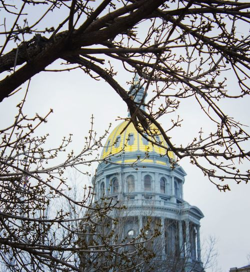 Denver Capital Building Tree City Architecture Branch Low Angle View Dome Built Structure Government Building Exterior No People Light And Shadow Milehigh Colorado 5280 Coloradophotographer Denver,CO Canont2irebel Vision303photography 303 Canon550D Colorado Photography Illuminated Full Frame