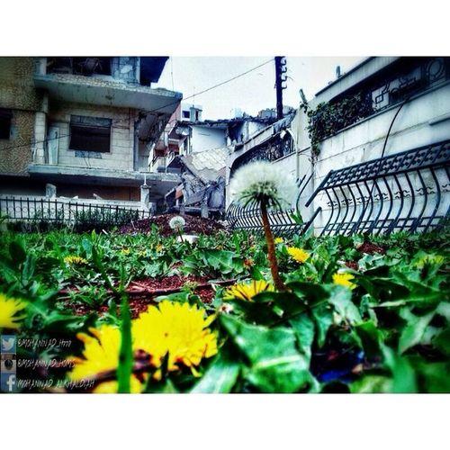 ثلاثة أعوامٍ من الزرع .. لابُدّ أن تُثمر ! ومهما حلّ الدمار .. علينا أن لانيأس فالأرض مازالت تُنبت والزرع بدأ يُزّهر .. ولكن امامنا شوكتان علينا إزالتهما لنحصد اجمل :) الثورة_السورية .. و يبقى_الأمل :) هنا_حمص حمص Syria Homs