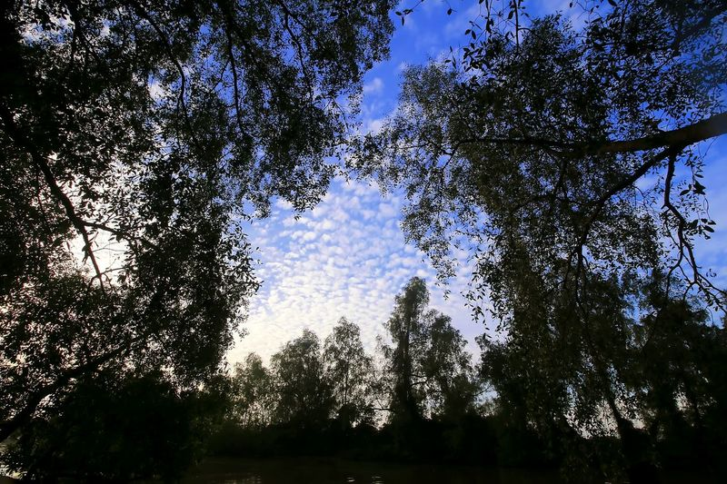 Trees HUAWEI Photo Award: After Dark Tree Branch Tree Area Forest Silhouette Sky