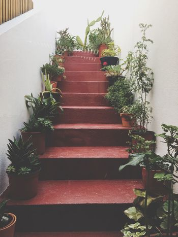 Stairway to Heaven Succulents Cacti Cactus Plantlover Plants Naturelovers Potted Plant Steps Plant Tree No People Growth Steps And Staircases Indoors  Nature EyeEmNewHere