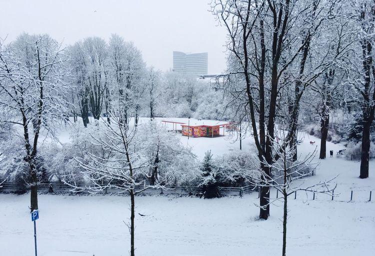 Whitespace Frankenplatz Derendorf Düsseldorf Winter Snow Cold Temperature Building Exterior Architecture Built Structure Tree