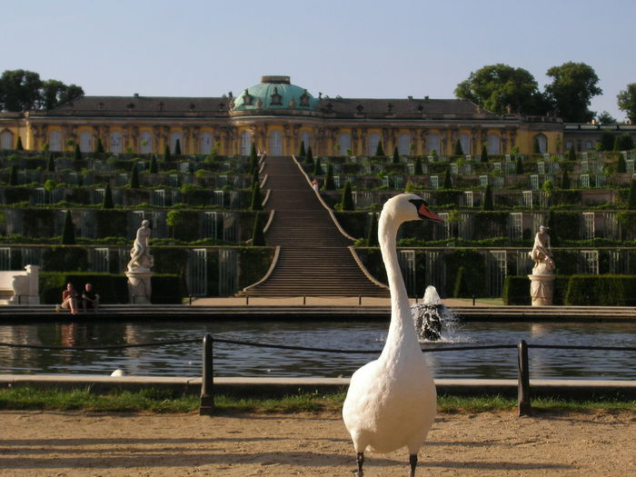 Potsdam Potsdam Park Sanssouci Enjoying Life Structure Architecture Taking Photos Nonfiltered No People Perspective Check This Out Famous Place The Architect - 2017 EyeEm Awards The Great Outdoors - 2017 EyeEm Awards Sommergefühle Pet Portraits Been There. My Best Travel Photo