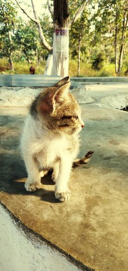View of cat sitting on footpath