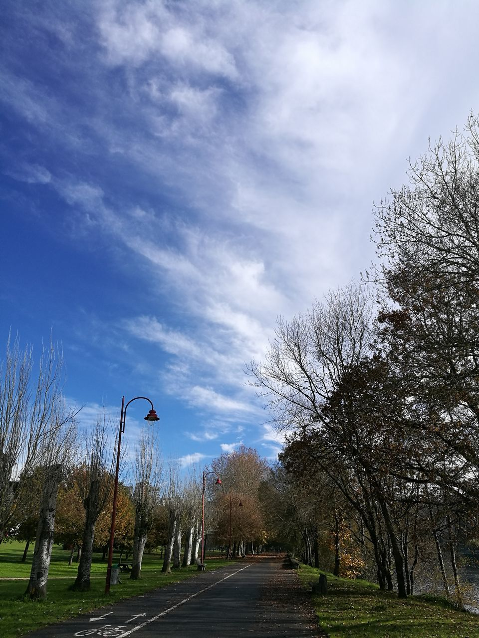 tree, the way forward, sky, bare tree, nature, day, outdoors, tranquility, cloud - sky, tranquil scene, road, beauty in nature, scenics, no people, branch, animal themes, grass, bird
