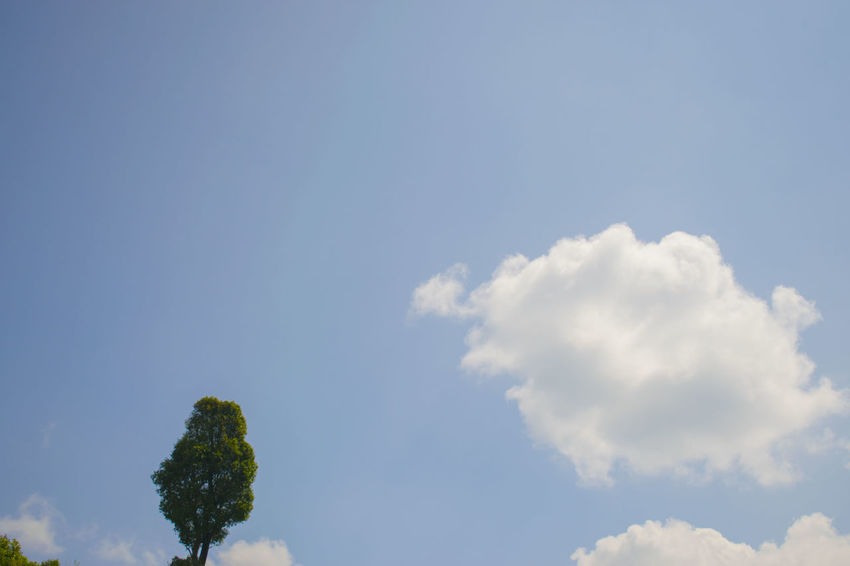 Beauty In Nature Blue Cloud - Sky Day Low Angle View Nature No People Outdoors Scenics Sky Tranquility Tree