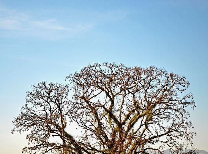 Beautiful Day Great Tree Ceder Tree Nature_collection Sky Landscape Nature Sky_collection Pindamonhangaba Sao Paulo - Brazil