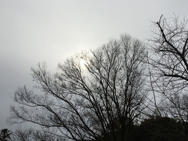 Beauty In Nature Cloudy Day No People Outdoors The Sun Trees Winter Winter Trees