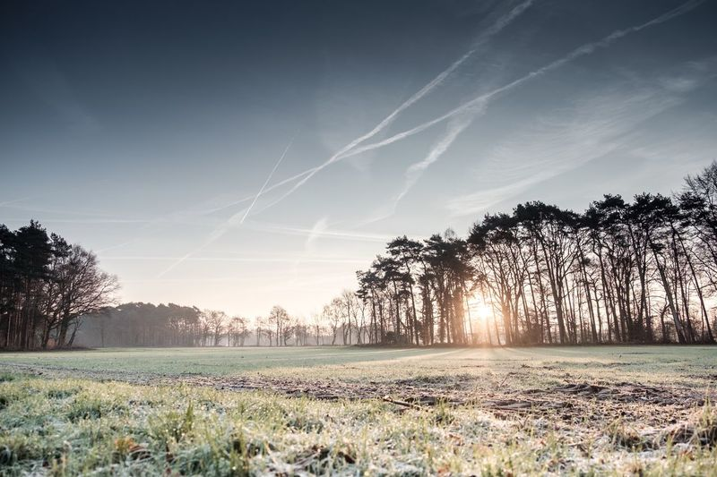 Tree Nature Field Tranquil Scene Landscape Tranquility Beauty In Nature Sky Sunlight Scenics No People Grass Growth Outdoors Rural Scene Day Showcase: December Fuji-xe2s Tenebrio.photos Wintertime Frosty Mornings Sunbeams Shades Of Winter