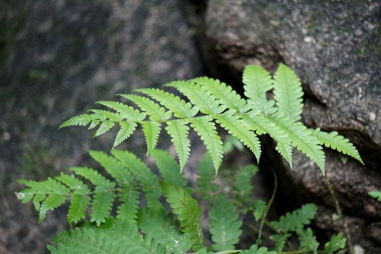 Leaf High Angle View Close-up Plant Green Color Fern Leaves
