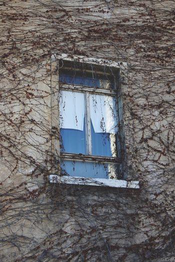Window Muro  Tumblr Window Architecture No People Built Structure Day Outdoors Finestre Photo Architettura Foglie Filtri Fotografia Muri Italia Fotografia -CM