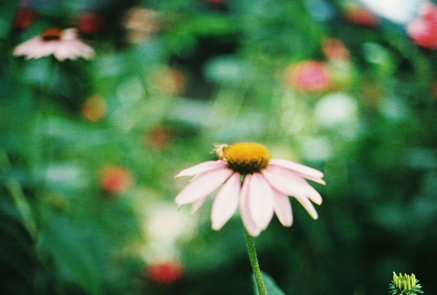 Wildflowers. 35mm Lomography Canont70 Filmisnotdead Filmphotography Colorado