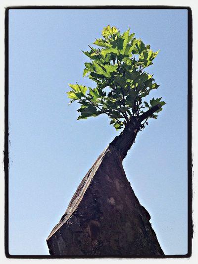 Trees Nature's Revenge Summertime Sesta Godano