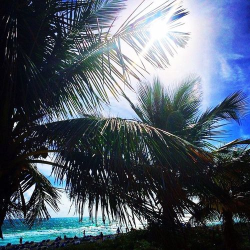Paradise Revisited Beachphotography Beach Miami Beach Palm Tree Tree Nature Growth Beauty In Nature Low Angle View Sky Palm Frond Blue Outdoors Tranquil Scene