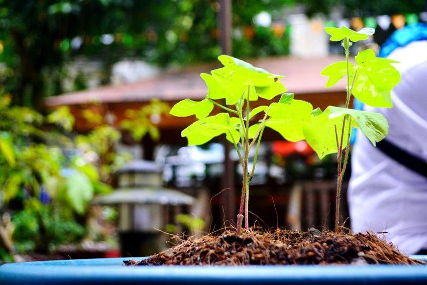 Leaf Selective Focus Plant Nature