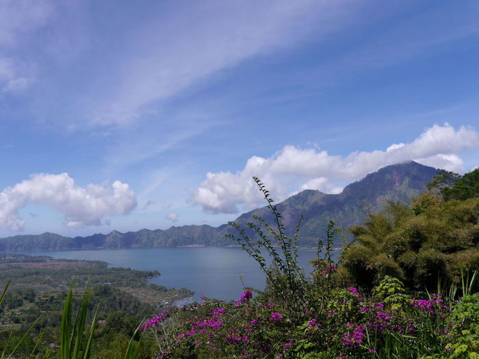 Beauty In Nature Blossom Blue Flower Lake Lake Batur Mountain Plant Tranquil Scene Tranquility