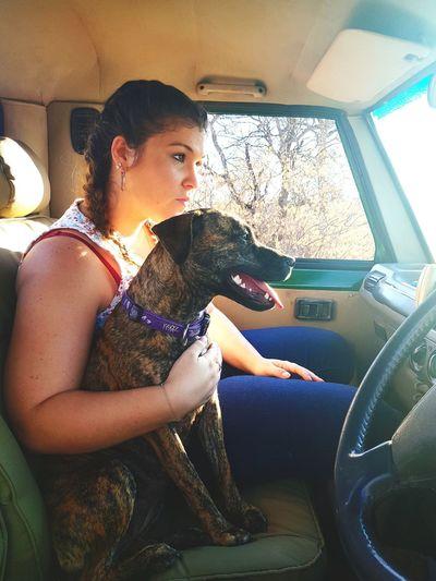 life on farm 🐶🐾 Staffiesarethebest Staffiesofinstagram Staffiecross Rogz  Staffielove Pets Dog Sitting Car Interior Road Trip Looking Through Window