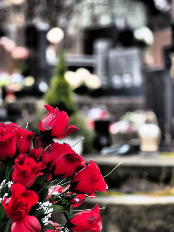 Flower Red Nature Outdoors Cemetery Flowers, Nature And Beauty Beauty In Nature Roses🌹