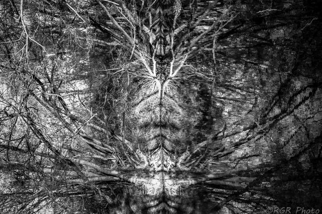 Abstract Abstract Nature Abstract Photography Beauty In Nature Black & White Black And White Blackandwhite Branch Check This Out Close-up Day EyeEm Gallery Growth Nature No People Outdoors Riverside Rotated Scenics Simetric Tree Tree Water BYOPaper!