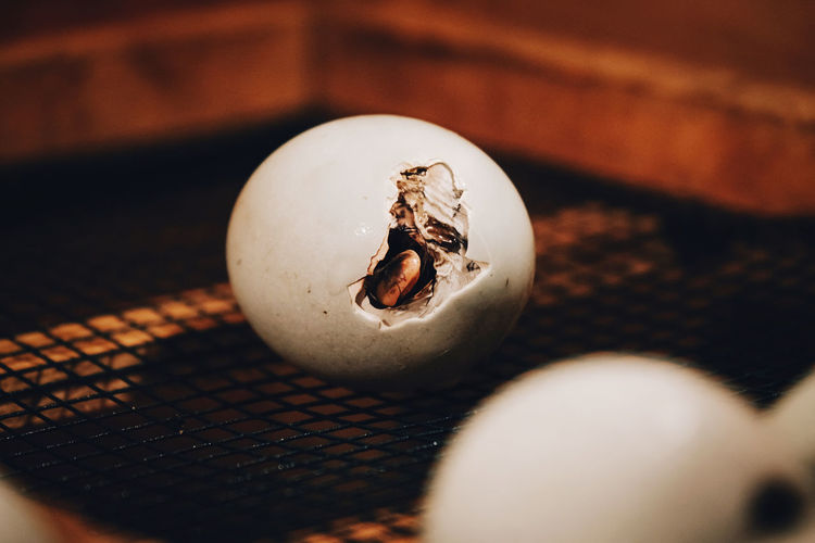 Duck trying to get out of the eggshell