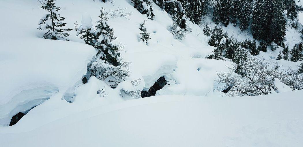 Snow Bird Cold Temperature Winter Full Length Snowboarding Sky Deep Snow Skiing Snowing Ski Track Snowfall