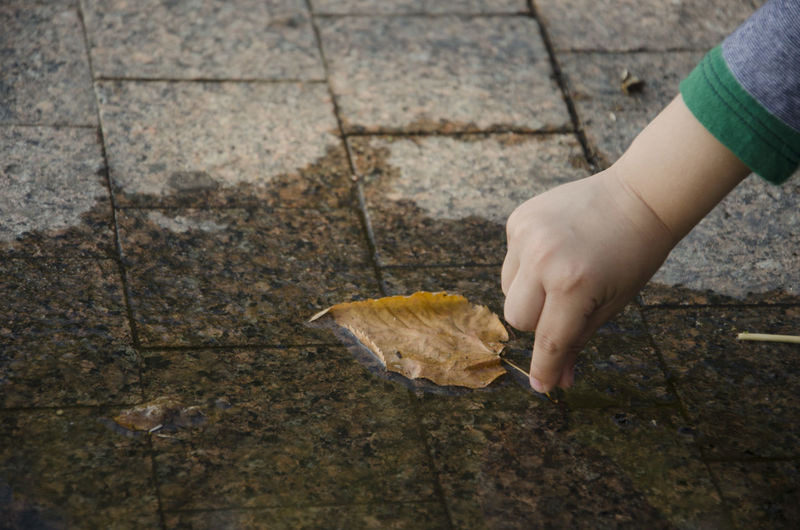 Fall Fall Of