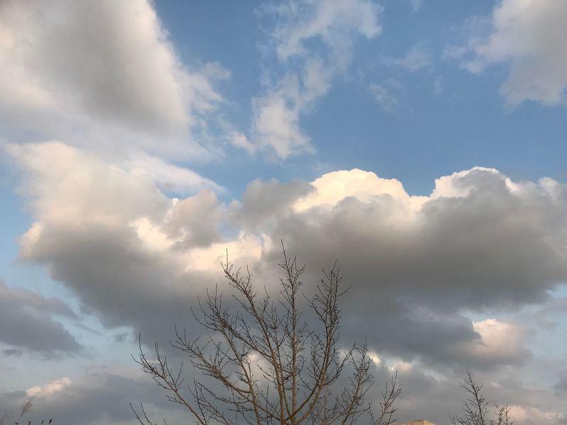 外運動中❣️ Sky Cloud - Sky Nature Tranquility Low Angle View Beauty In Nature Tree No People Tranquil Scene Scenics Day Outdoors EyeEm Gallery Iphone7 Japan Love EyeEm Best Shots Fukuoka Nature ウォーキング ランニング 3月 沿岸 Happy