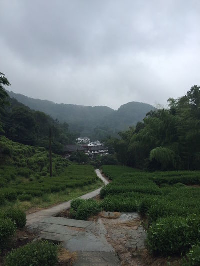 Exploring nature near Hangzhou | 2016 Beauty In Nature Cloud - Sky Day Detox Hangzhou Landscape Mountain Nature No People Outdoors Sky Storm Storm Cloud Tea Tea Village Winding Road