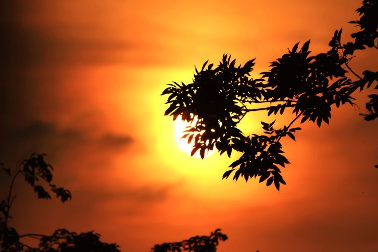 Sunset In My Garden Nature Photography Natural Beauty Light And Shadow Flowers, Nature And Beauty Orange Color Flowers,Plants & Garden darkness and light Tree Tree Area Sunset Multi Colored Beauty Silhouette Red Tree Trunk Backgrounds Orange Background Plant Part