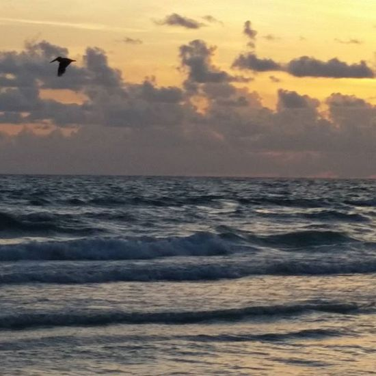 Pelican Siestabeach Sunset And Clouds  Beach Siesta Key Beautiful Sky_scapes Sky_collection Beach Photography Greatest_shotsnofilter
