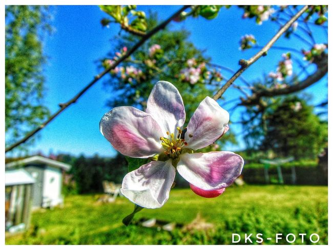 Sweden The True Story Flower Head Flower Tree Insect Close-up Animal Themes Sky Plant Blooming In Bloom Pollen
