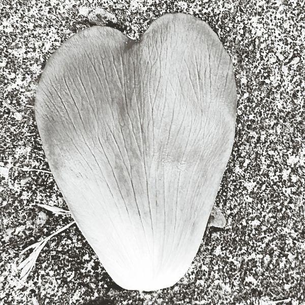 Flower Petal Abstractporn Abstracters_anonymous Blackandwhite Photography Blackandwhite Black & White Heart Welcome Weekly. EyeEm Market © Eyeem Market Team Eyeem Marketplace The Eyeem Award 2016