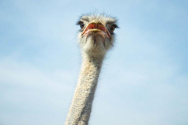 Close-up portrait of a bird against sky