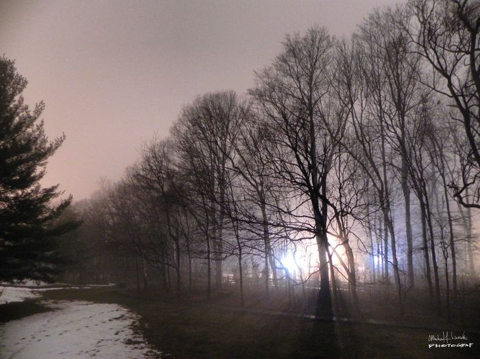March 2015 | Behind the townhouse I used to own | Photo: Michael F. Pichette Landscape Nature Fog Bare Tree Outdoors Beauty In Nature Foggy Lights Nightphotography Eye4photography  EyeEm Best Shots EyeEm Gallery Eyeemphotography Night Nature Tree Snow