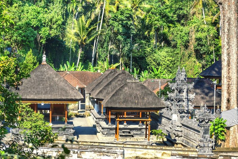 Architecture Building Exterior Built Structure Tree House Residential Structure Residential Building Roof Travel Destinations Day Branch Growth Outdoors Green Color Rooftop Backyard Surrounding Rural Scene No People Bali EyeEm Best Shots Eye4photography  Travel Relaxation
