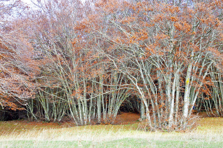 Bare trees on field in forest