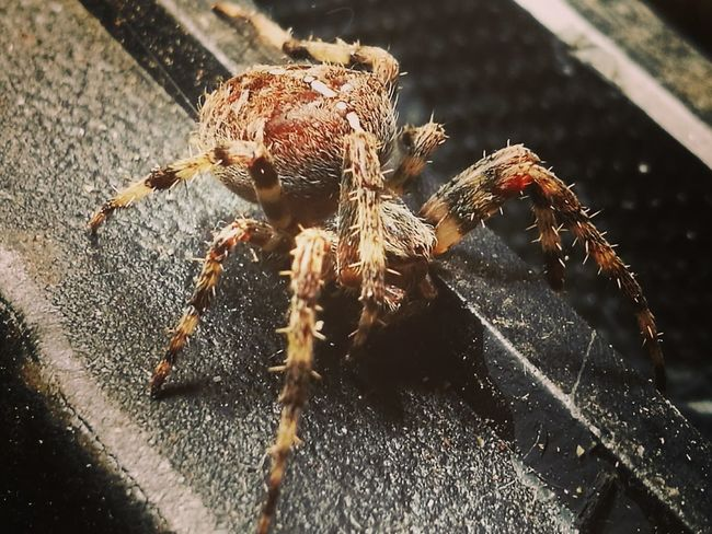 Spider No People Close-up Arachnid Arachnid Photography