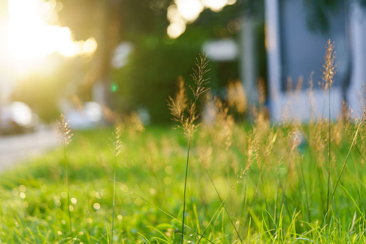 Close-up of fresh grass in field