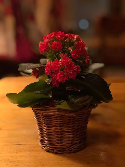Alpine flowers I❤️grandchalet Good Chef Gstaadmylove I❤️Gstaad Grandchalet EyeEmNewHere Shades Of Winter Bolonie Style Bolonie Art Bolonie Flower Freshness Basket Indoors  Focus On Foreground Table Fragility Petal No People Close-up Nature Flower Head Day