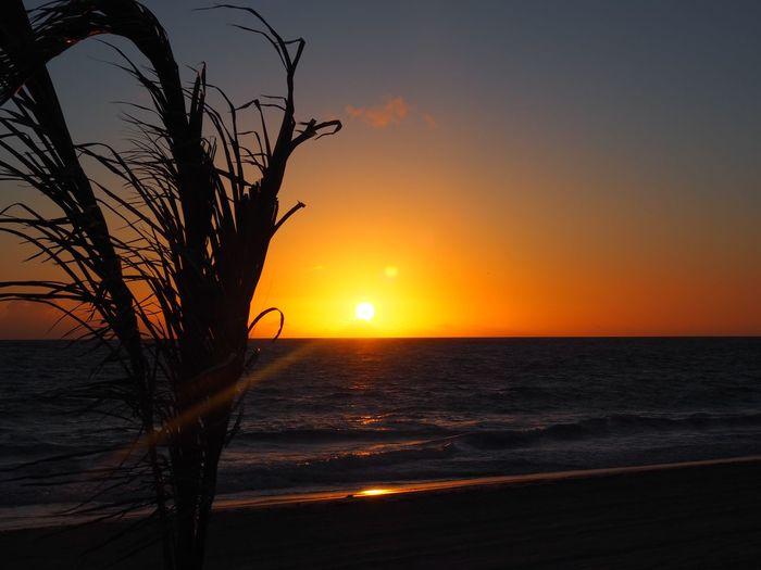 Sky Sunset Sea Water Beauty In Nature Scenics - Nature Horizon Horizon Over Water Nature Plant Sun Land Beach Idyllic No People