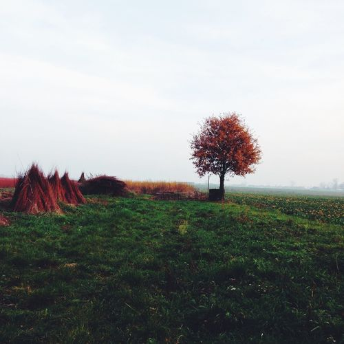 EyeEm Best Shots VSCO Autumn Colors From My Point Of View The EyeEm Facebook Cover Challenge IPS2015Color IPS2015Fall